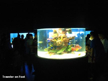 aquarium-2.jpg