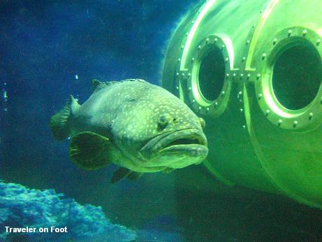 big-fish.jpg