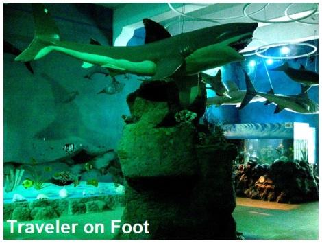 museo-aquarium