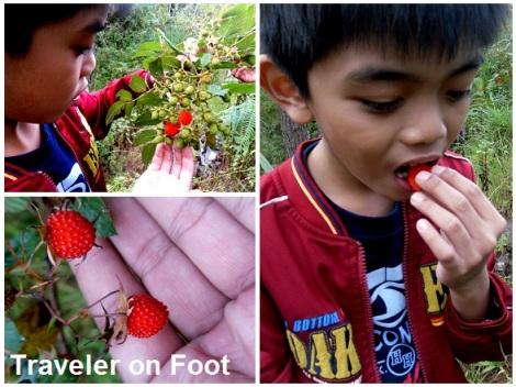 Sagada wild raspberry